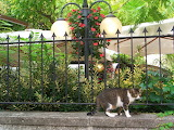 Katze vor zaun