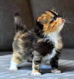 Proud kitten