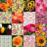 Flower Collage 4