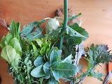Mixed Vegetables by Rachel Helmreich
