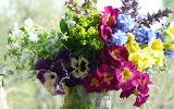 410241_leto_buket_cvety_okno_solnce_1920x1080_(www.GdeFon.ru)