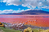Bolivia-pink lake-flamingos