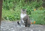 chaussette le chat /Chaussette the cat 02