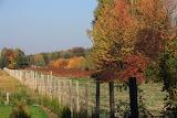 Jesień za płotem