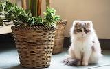Cat-room-wicker-basket-plant