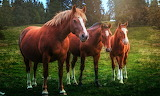 Horses, nature, trees, grass, trio