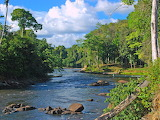 Suriname Coppename-River