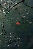 Sole Leaf