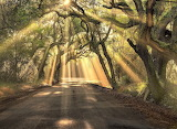 Trees - Botany Bay Road - South Carolina