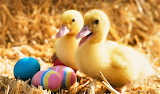 #Ducklings and Easter Eggs