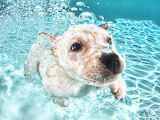 Underwater-puppy-photography-seth-casteel-9