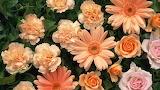 Carnations gerbera roses bouquet