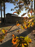 Packhouse Through Fall Leaves