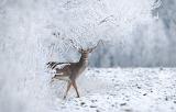 Олень в снежном лесу