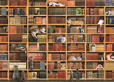 The Cat Library (for kids)