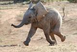 Tierbabys Elefant