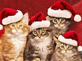 #Funny Christmas Cats