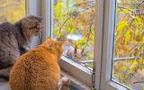 Cat looking at squirrel through window