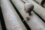 Snail / Escargot