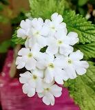 Flores601