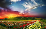 Wallpaper-beautiful-landscape-scenery-rose-valley-countryside