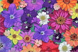 colorful flowers abstract art