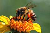 #Busy Bee