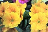De mi jardín 837