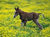 Foal among flowers