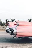 pink fins