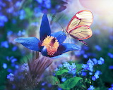 butterfly on gentian