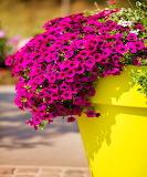 ☺♥ In the garden...