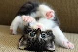Cute-cat-picture-wallpaper