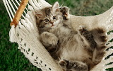 Cat napper-wide