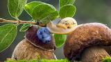 Улитка на грибах