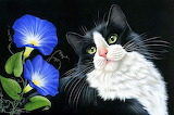 Cat and morning glories, by Irina Garmashova