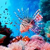 * Lionfish...