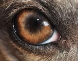 I Got My Eye On You