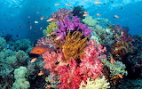 Ocean-seabed-coral-colors-exotic-tropical-fishes-underwater worl