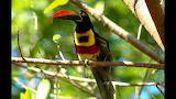Exotic-jungle-birds