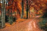 Autumn-128