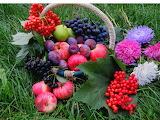 Grass, flowers, food, basket, fruit, grapes, berries, apples