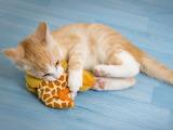 Cuddlesome kitten