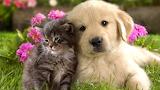 Cadells - Puppies