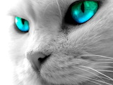 Kitty-blue-eyes