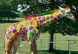 ConfettiGiraffe