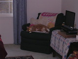Teddy with Lasers on FULL BEAM!