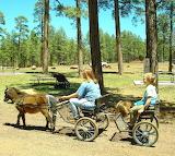 #Pinetop AZ Pony Cart Rides