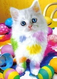 Painted Kitty