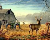 2 Bucks On Farm